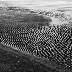 Zandgolfjes in b&w
