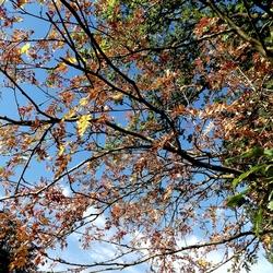 Vroege herfstkleuren