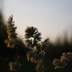 Mystical grass