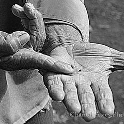 oude handen.jpg