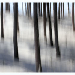 Moving Forest.....