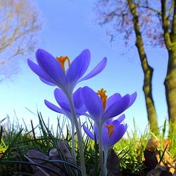 Eindelijk...lente