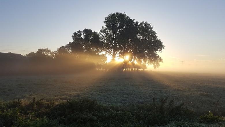zon schijnt door de bomen