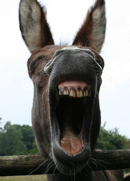 """Lachu! - Uitgelachen worden <img  src=""""/images/smileys/wilt.png""""/>"""