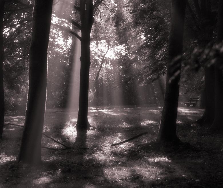 Mythical forest - Een mooie plaats om tot rust te komen op deze bank in dit zeer mooi belichtte bos.