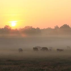 Het is nog vroeg in Drenthe