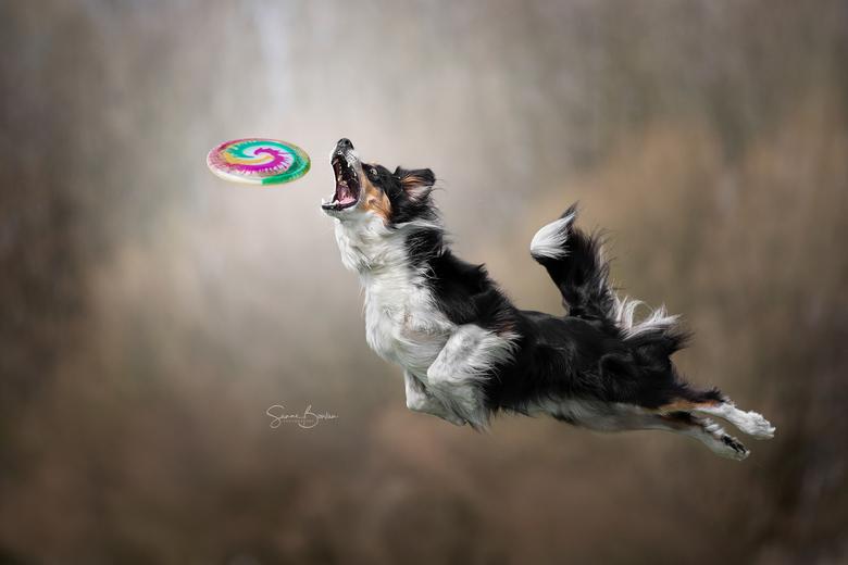 Frisbeehond Chester - Gemaakt tijdens de workshop Dogs in Action 2.0 van Claudio Piccoli