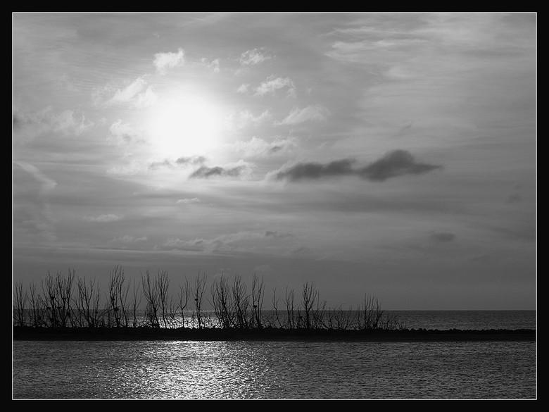 Markermeer - De bomen van de aalscholvers aan het Markermeer,liggend aan de dijk Enhuizen Lelystad.<br /> <br /> Die in de broedtijd wit van de poep