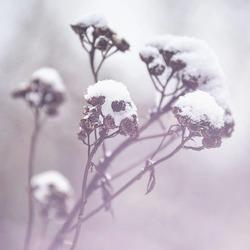 sneeuw in de ochtend