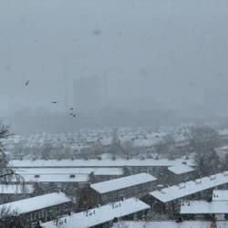Snowy cranes