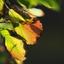 Kleuren Herfst