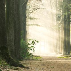 The light path