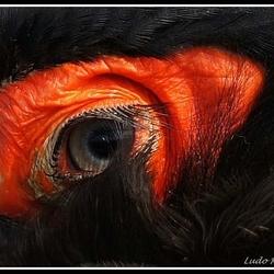 The evil eye...