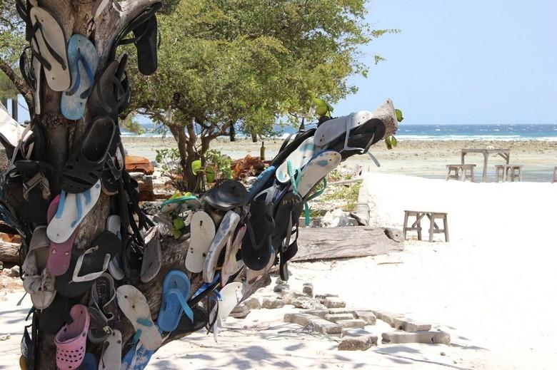 Flip flop Tree - Boom langs de kust van Gili Trawangang