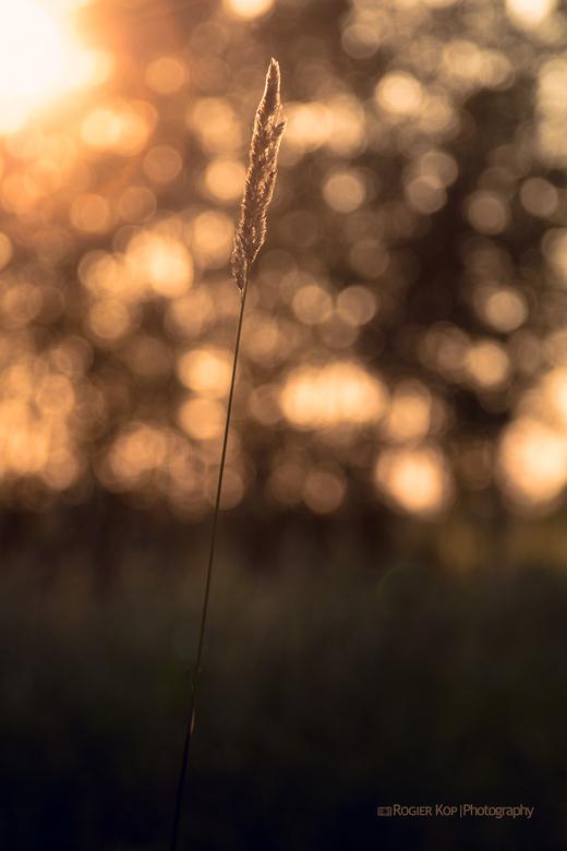 bokeh - Een mooie zonsondergang in het natuur gebied Het Twiske in de buurt van Den Ilp