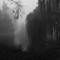 Mist-bomen