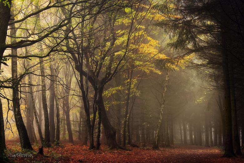"""Classic Autumn. - Buiten regent het en de wind huilt. Hier een iets warmer herfstplaatje om jullie op te warmen <img  src=""""/images/smileys/wilt.png""""/>"""