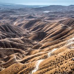 de woestijn leeft