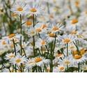 Wilde planten en bloemen