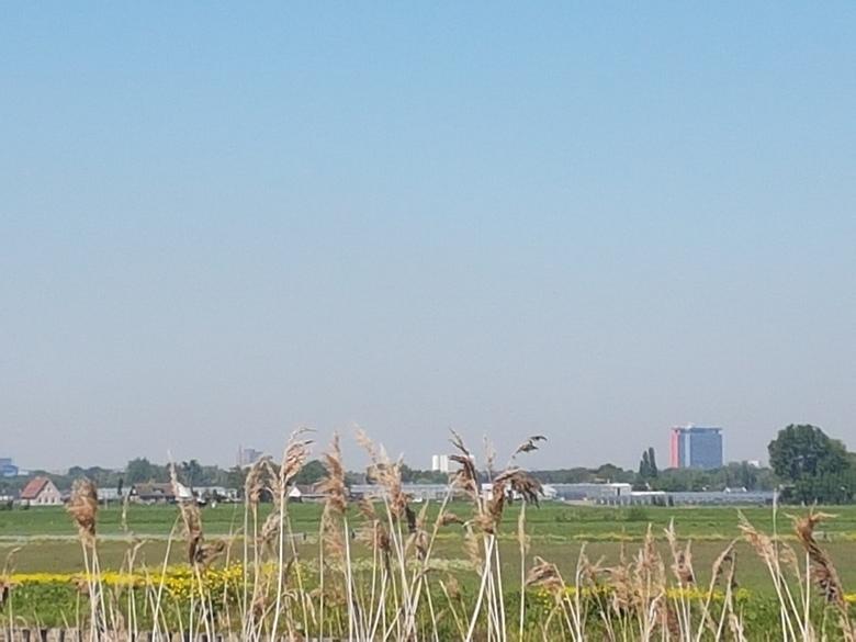 Zicht naar Delft