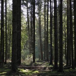 Zon in het  bos