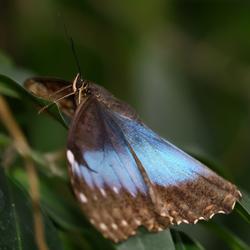 vlinder  -5-