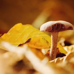 Hello autumn..