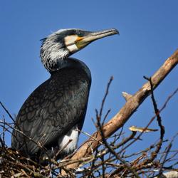 Op 't eigen nest