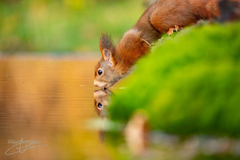 Herfst maakt ook dorstig - Eekhoorn heeft dorst
