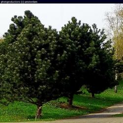 Bomen in Gein3dorp