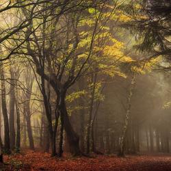Classic Autumn.