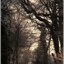 Walking in the morning light