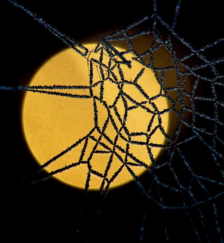 rijp - vanochtend in de mist. rijp op een spinnenweb !