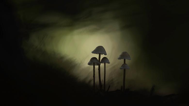 Dark Times - Het zijn donkere tijden en daar vond ik deze foto mooi bij passen.<br /> De foto is gemaakt in de M-stand .Net zo lang met de sluitertij