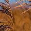 thema riet - puur natuur
