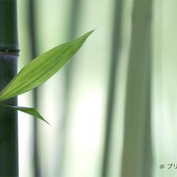 Chikuzai 竹材