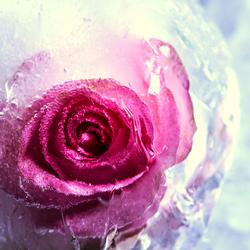 Frozen love
