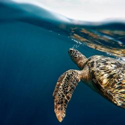 Bali_Turtle