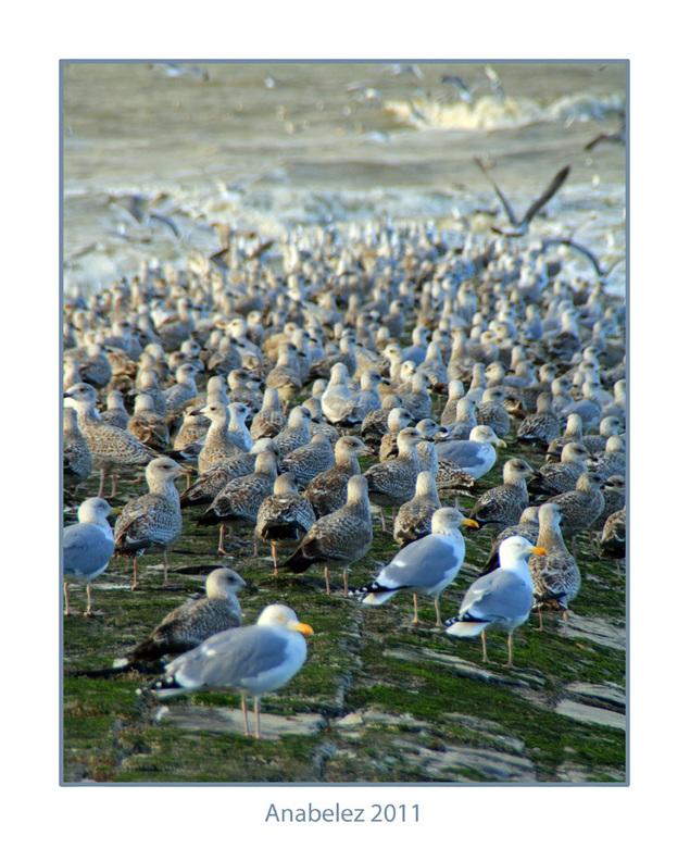 BIRDS - Dag zoomers,<br /> <br /> Een tijdje al niet meer zo actief op zoom. Oa omdat ik niet meer zo veel fotografeer....maar de camera is weer uit