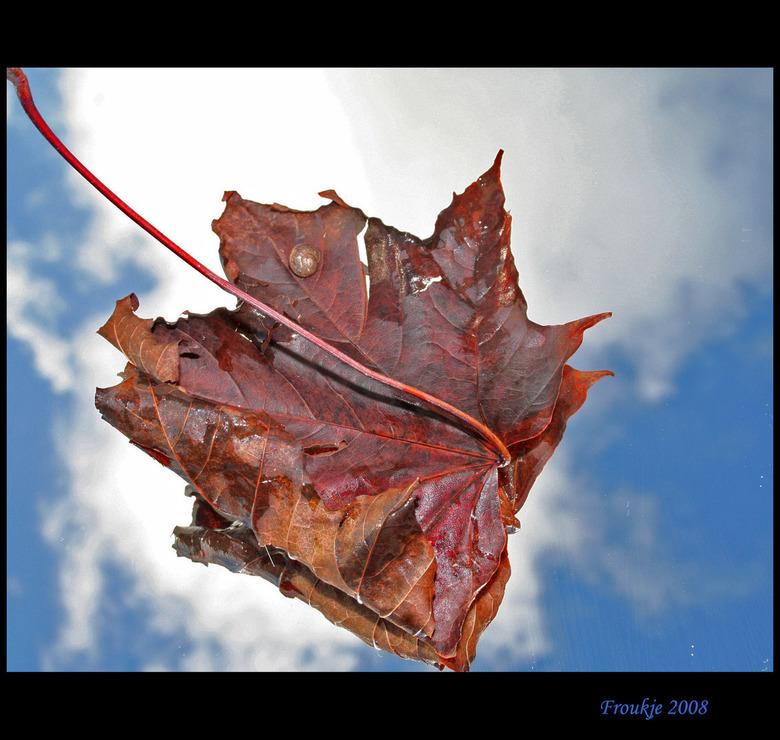 met slakje - Nog maar een herfstfoto ,alhoewel er al prachtige winterse foto's voorbij komen ,hier in friesland hebben we niet veel sneeuw gehad