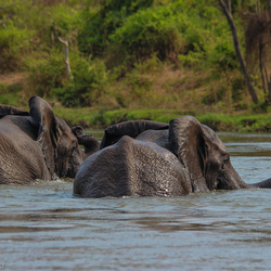 Olifanten in Majete Wildlife Reserve