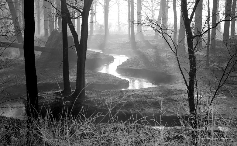 Winter Morning Swirl