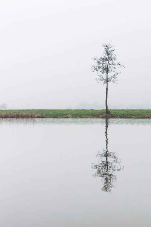 De eenzame boom.. - Kijk ook eens op www.luvo-photography.com!<br /> <br /> Eenzaam op een mistige dag stond deze boom. Kaal, koud, nog volop winter