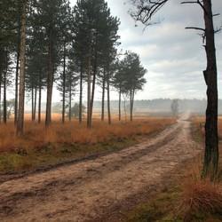 aan de bosrand