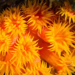 Onderwater 'bloemetjes'