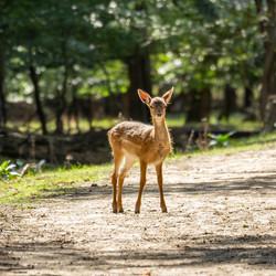Hallo bambi!