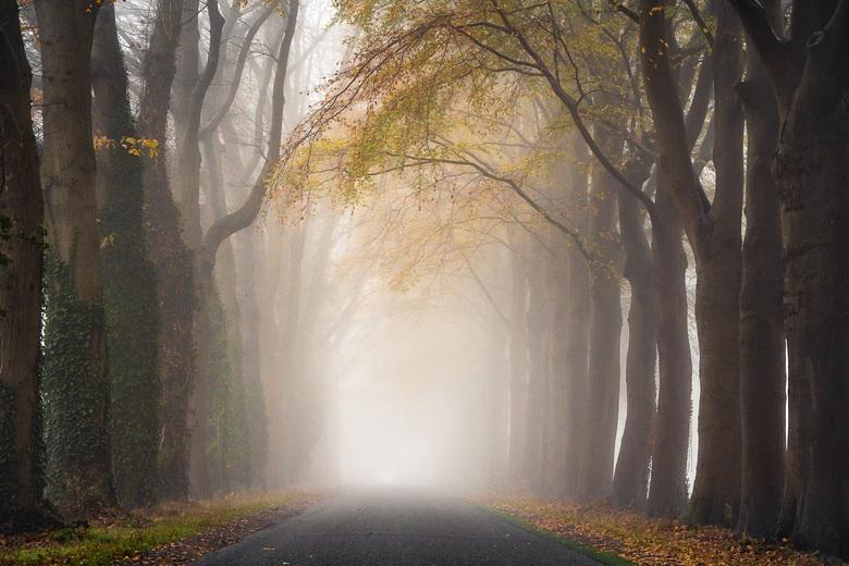 Weg in de mist met herfstkleuren -