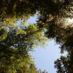 Regenwoud Tofino