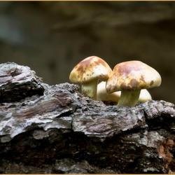 Een groepje eenzame paddenstoelen