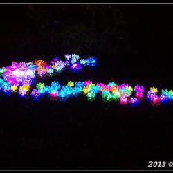 Glow 2013 Waterlelie's